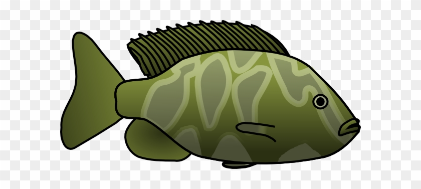 Green Fish Clip Art At Clker - Green Fish Clipart #576911