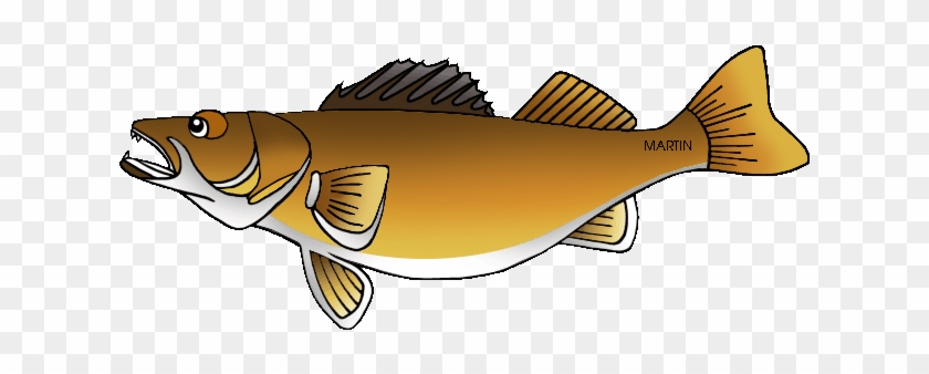 Walleye Images | Free Vectors, Stock Photos & PSD