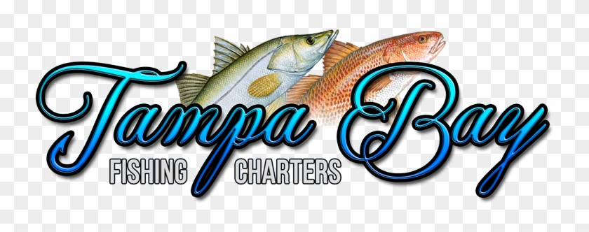 Tampa Bay Fishing Charters - Trout #578797