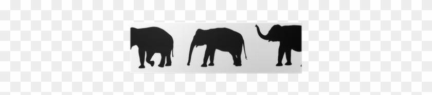 African Elephant #581166