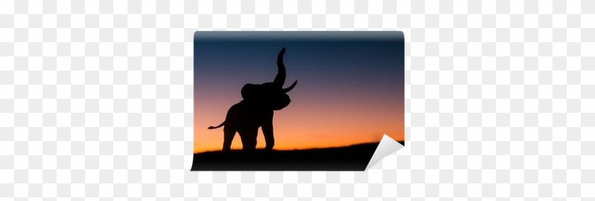 African Elephant #581213