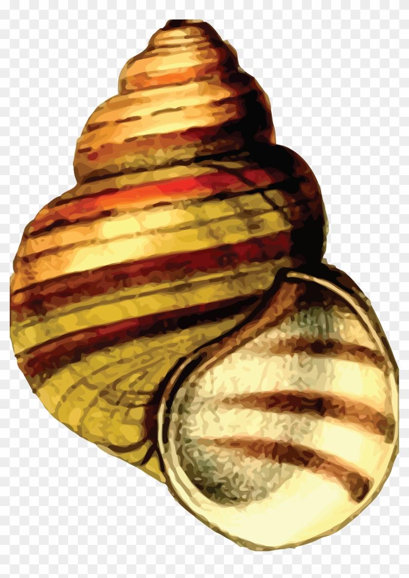 Free Clipart Of A Sea Shell - Clip Art Sea Shells #581882