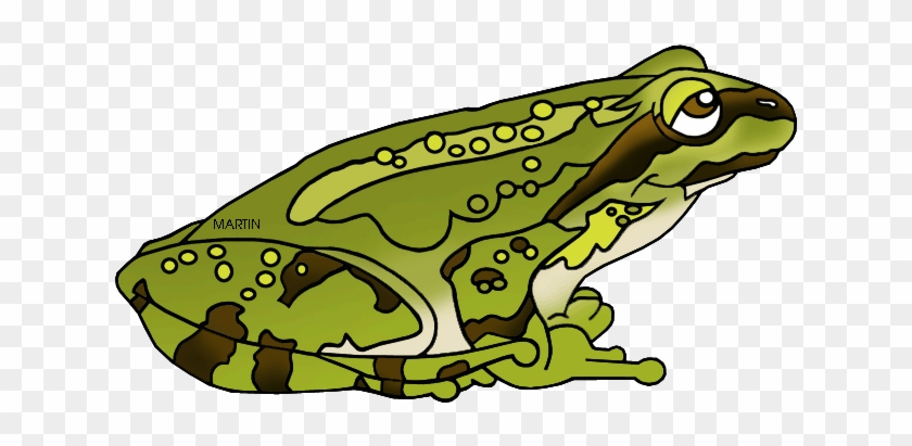 Green Frog Clipart Amphibian - Pacific Tree Frog Clipart #585928