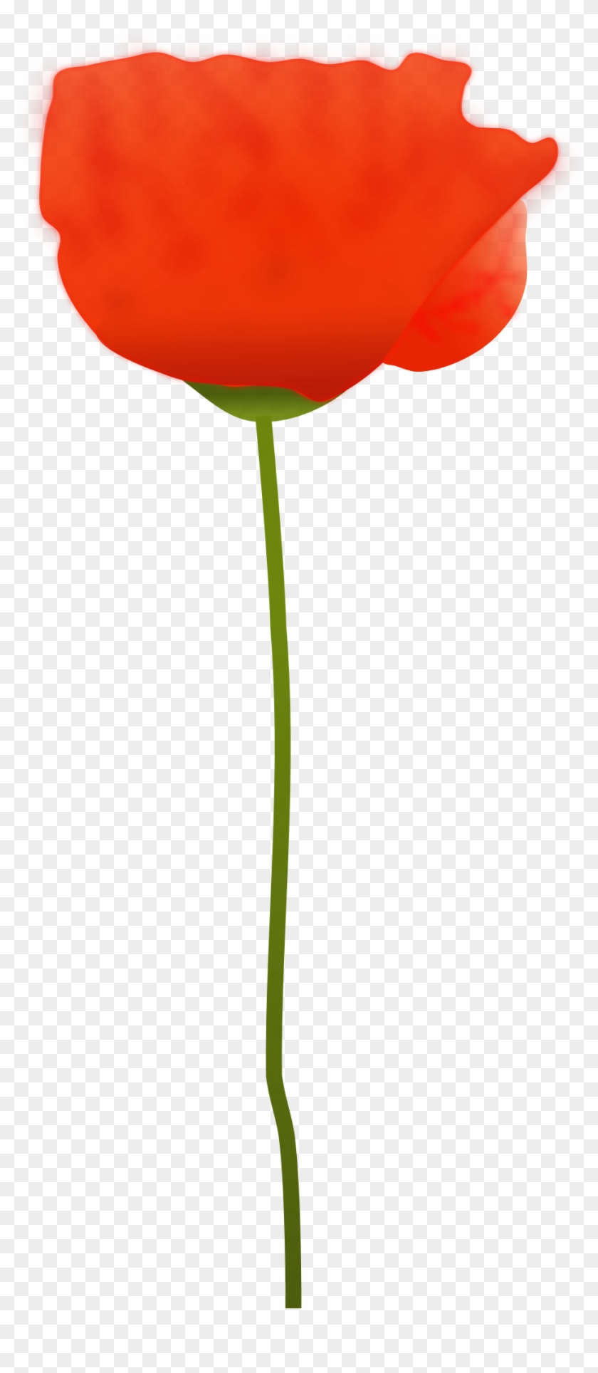 Clipart Free Picture Of A Poppy Flower Free Transparent Png