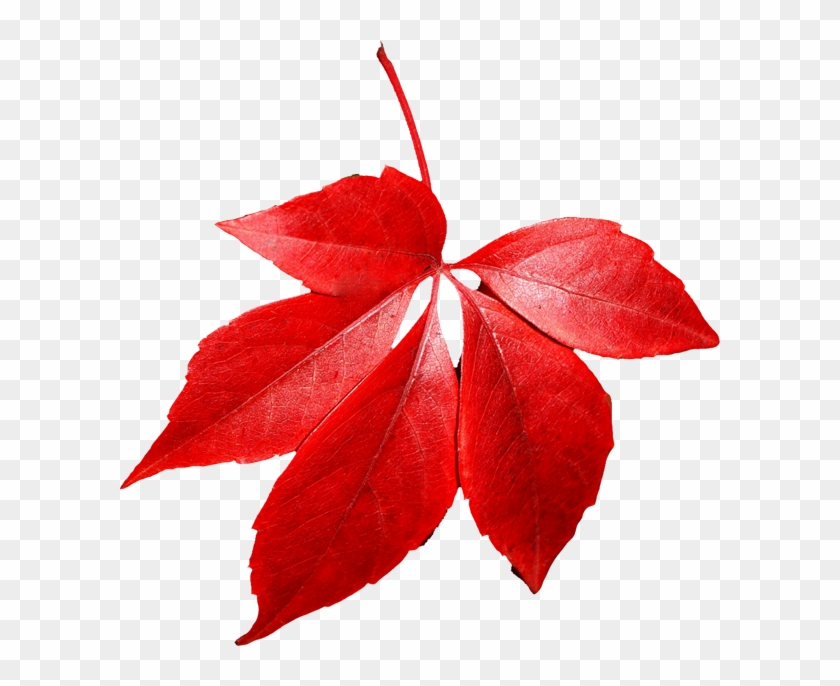 Autumn Leaves Png Images - Red Autumn Leaf Png #103498