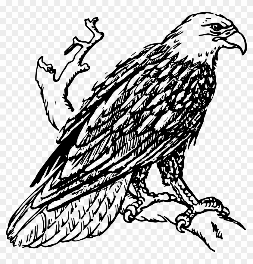 Bald Eagle - Outline Image Of Eagle #103960