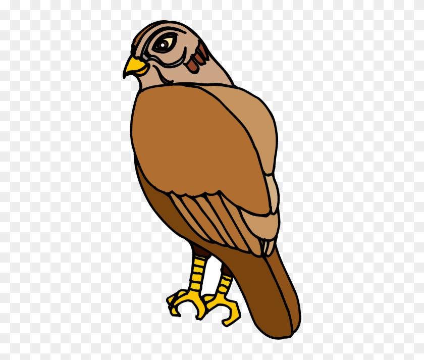 Hawk Clip Art - صقر كليب ارت #104032