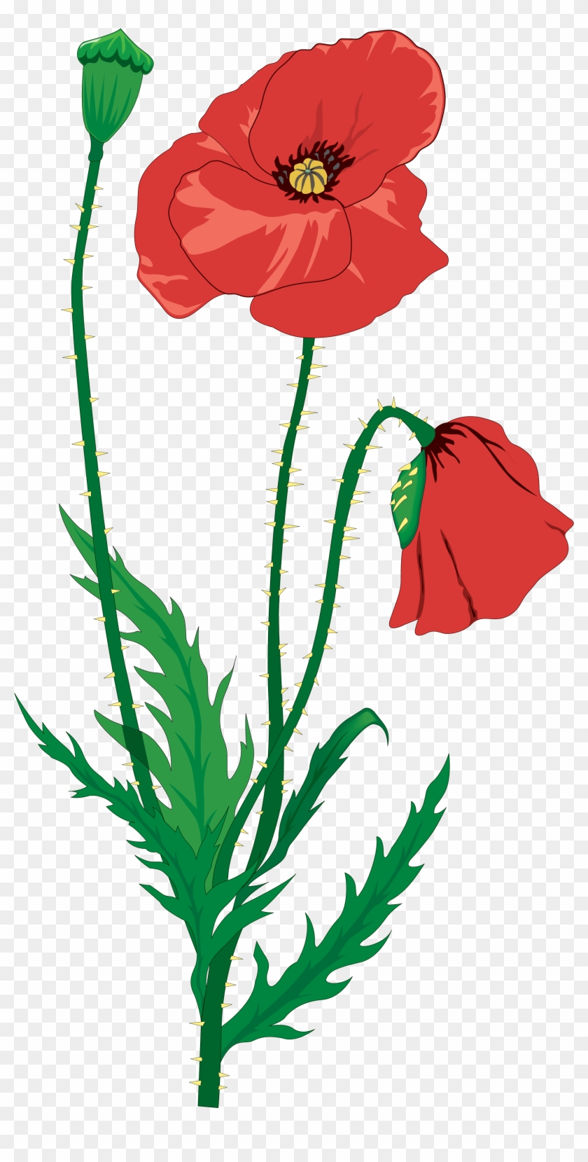 Drawing Flower Clip Art - Memorial Day And Poppies #104635