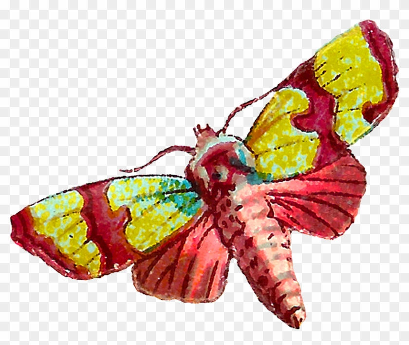 Both Of The Moth Images Are Shabby And Distressed, - Vintage Moth #104654
