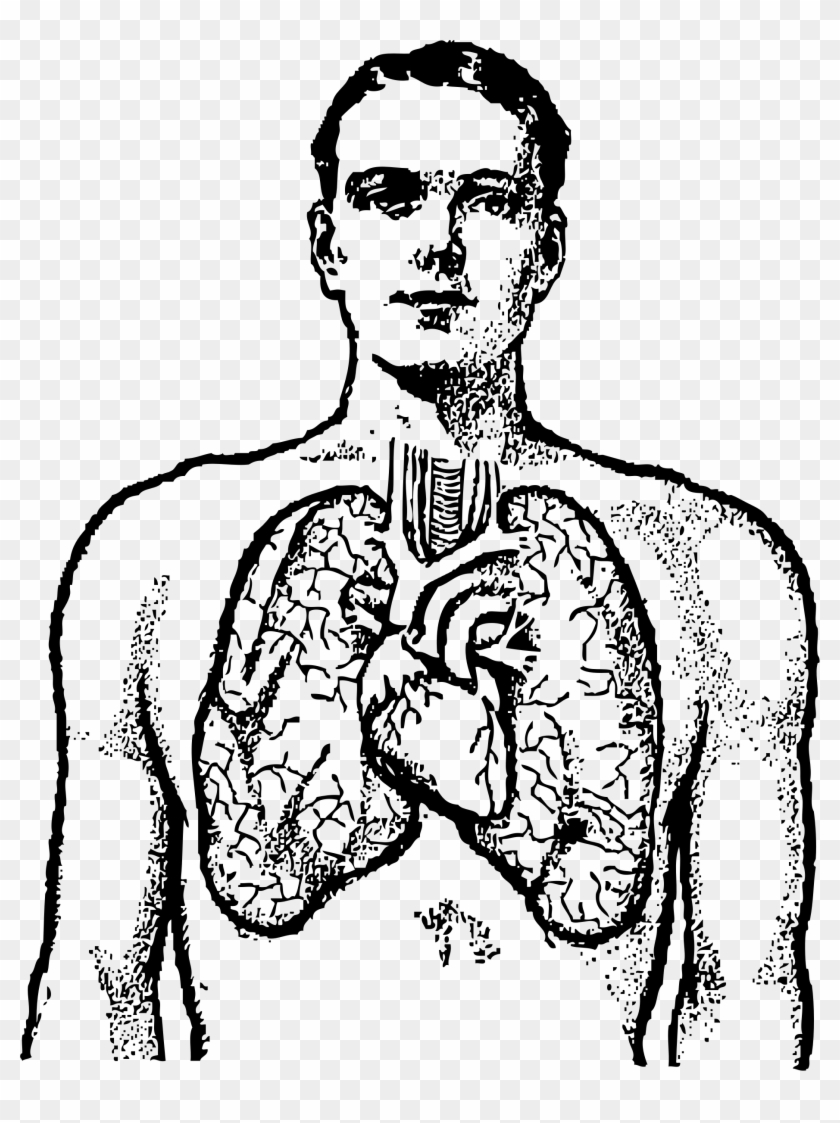 Clipart - Human Lungs Clipart Black And White #105049