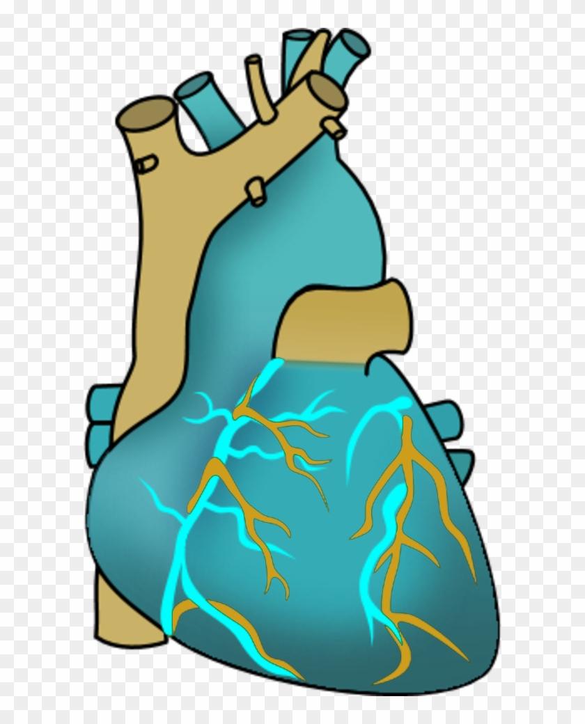 Vector Clip Art - Human Heart Clipart #105631