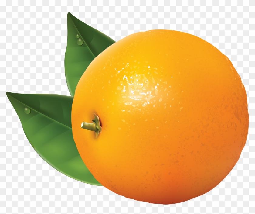 Orange Clip Art Free Clipart Images - Orange Clipart Transparent #105665