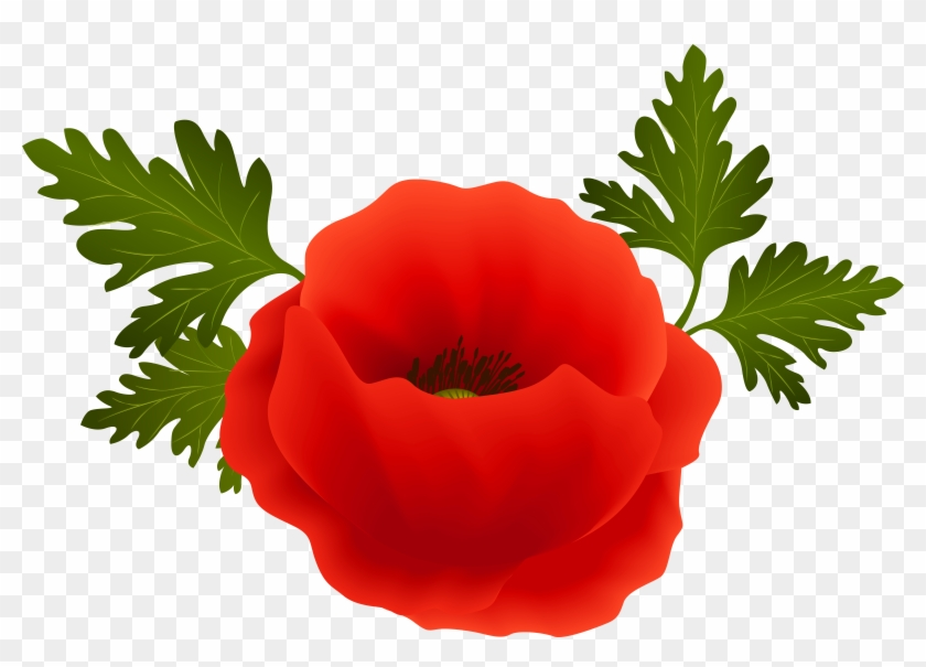 Poppy Png Clip Art Image - Transparent Background Poppy Png #107126