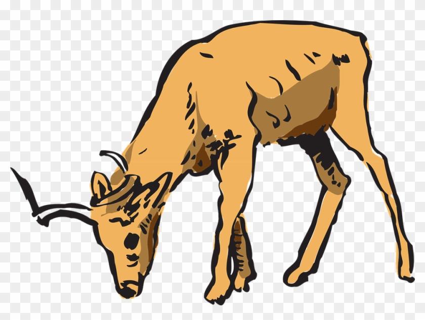 Horns Clipart Wildlife - Deer Eating Clipart #107397