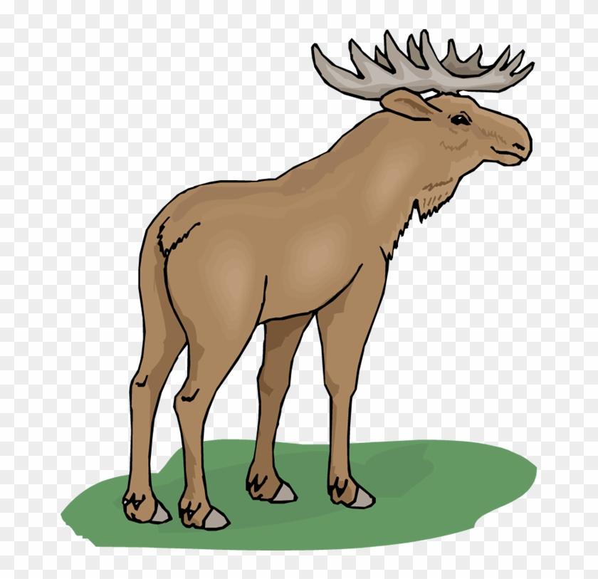 Top 75 Moose Clip Art - Moose Clipart #107476