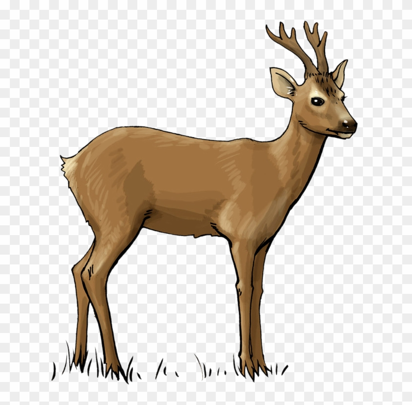 Deer Clip Art - Deer Clipart #107572
