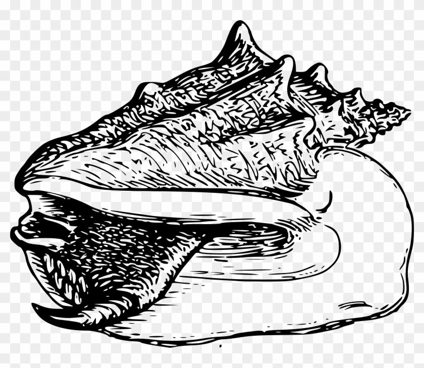 Shell Clipart Conk - Clip Art #107808