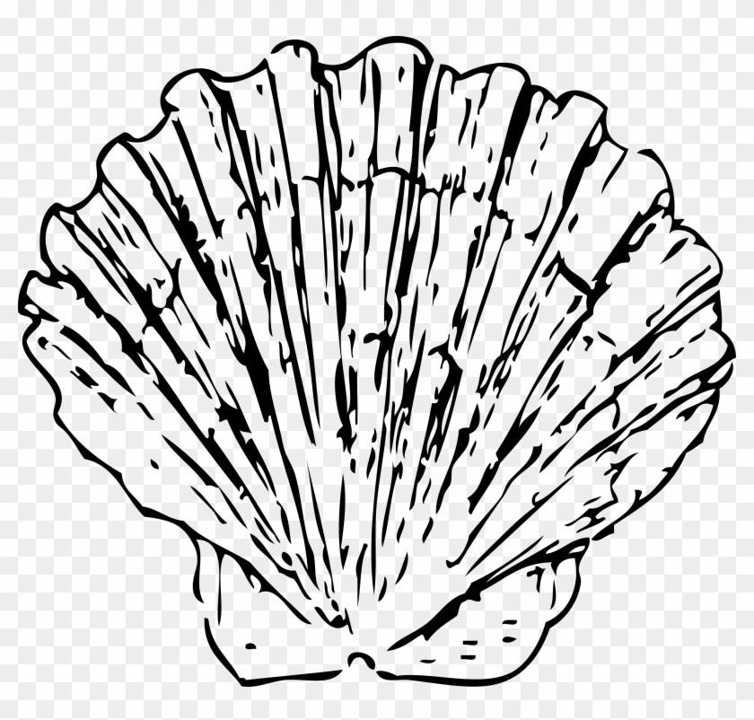 Shell Clipart Conk - Black And White Shell #107864