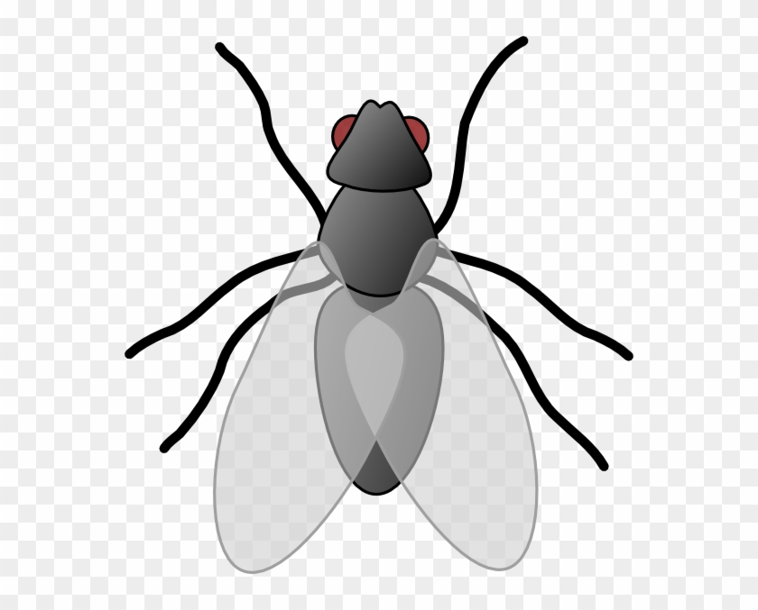 fly clip art insect clipart free transparent png clipart images rh clipartmax com Bug Clip Art insect clip art free images