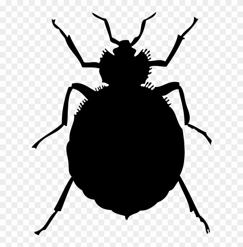 Free Bug Clip Art Black And White Bed Bugs Free Transparent Png