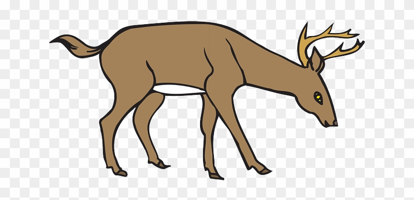 Animal Deer, Down, Wild, Leaning, Forest, Eating, Animal - Deer Eating Grass Clipart #598409