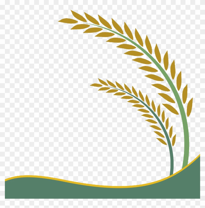 paddy field oryza sativa rice crop clip art rice vector