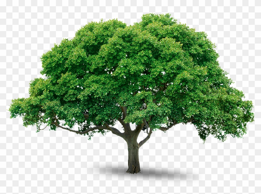 Tree Png Images Pictures Png Trees Free Download Free Transparent Png Clipart Images Download