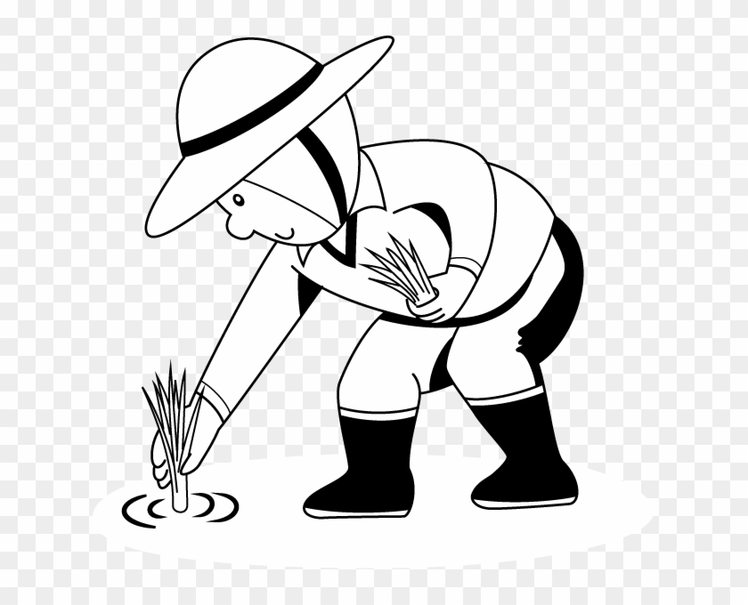 Rice Plant Colouring Pages - Rice Farm For Coloring - Free ...