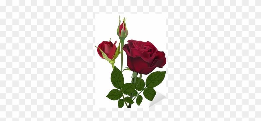 Dark Red Rose Flower And Buds Isolated On White Sticker - Botão De Rosa Vermelha #625100
