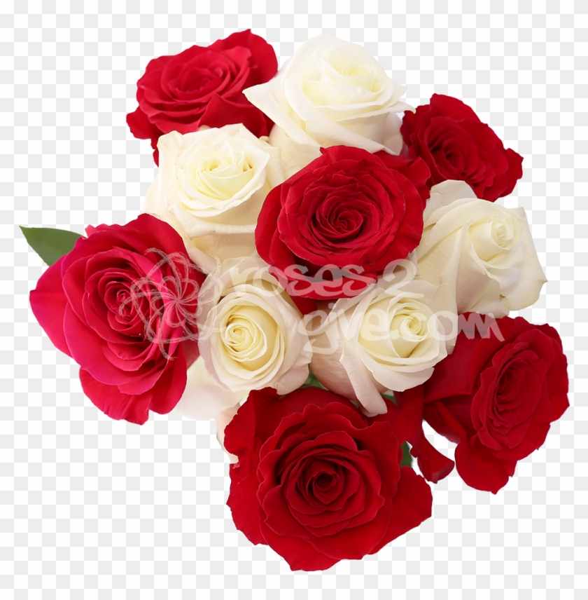 White Red Combination White And Red Rose Flowers Images Png