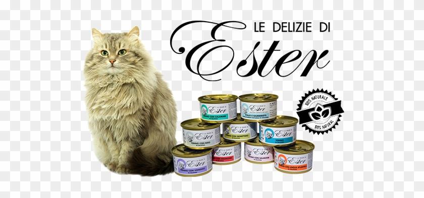 Ciao E Te E Bentornato/a Nel Nostro Blog/sito - Domestic Long-haired Cat #631251