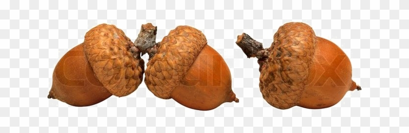 Acorn Png High-quality Image - Saving The Planet Without Costing The Earth #631526