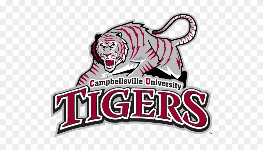 Campbellsville University Tigers, Naia/m - Campbellsville University Tigers #114511