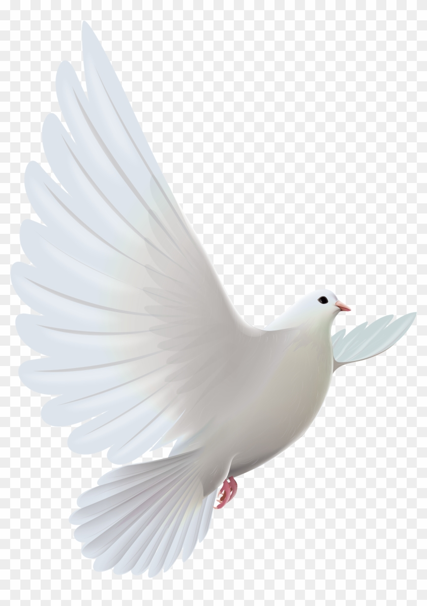 white dove transparent png clipartu200b gallery yopriceville white