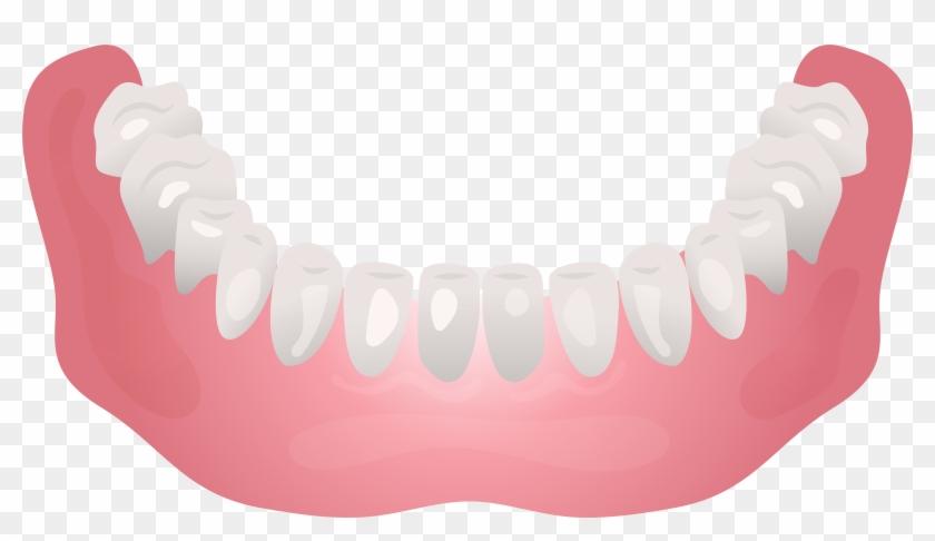 Bottom Human Jaw Clip Art - Clip Art #115614