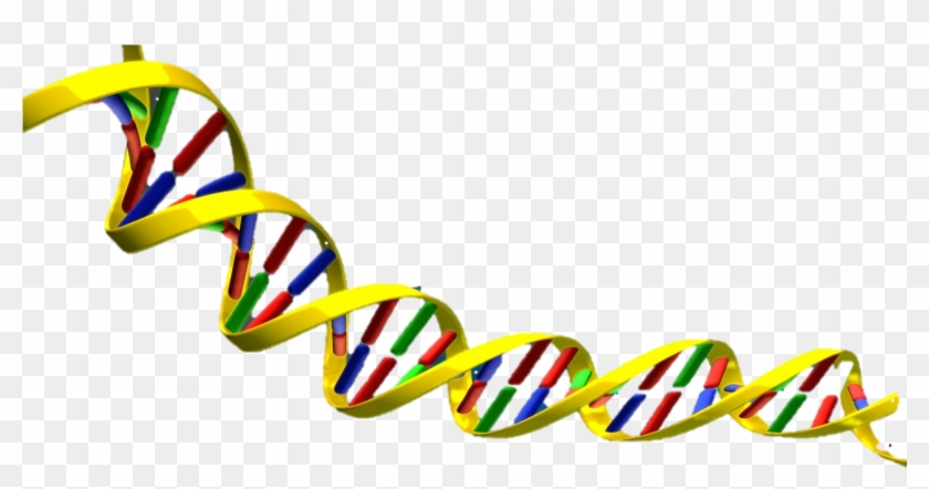 Science Clipart Dna - Dna Double Helix Png #117270