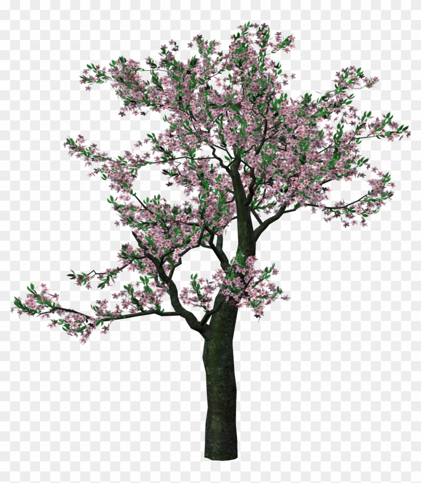 Showing Post & Media For Spring Tree Clip Art Cartoons - Spring Trees Png #635927