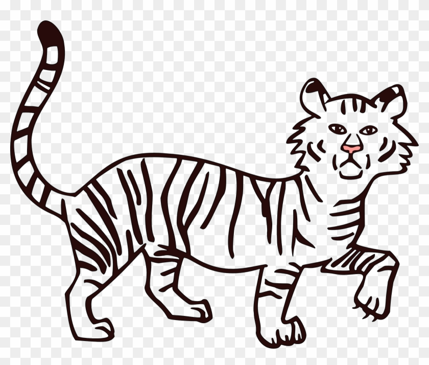 Tiger Outline Drawing At Getdrawings Com Free For Personal - Fill Color In Drawing #647033