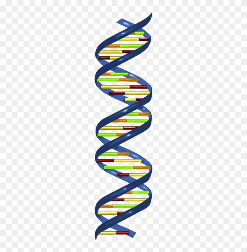 In Most Organisms, The Primary Genetic Material Is - Dna Nucleotide #650843