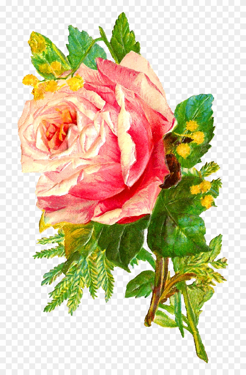 The Second Digital Flower Image Is Of A Bunch Of Pink Antique Rose