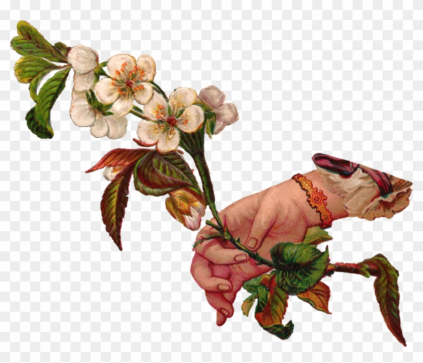 This Is A Lovely Digital Download Of Dogwood Flowers - Victorian Flower Illustration Png #658122