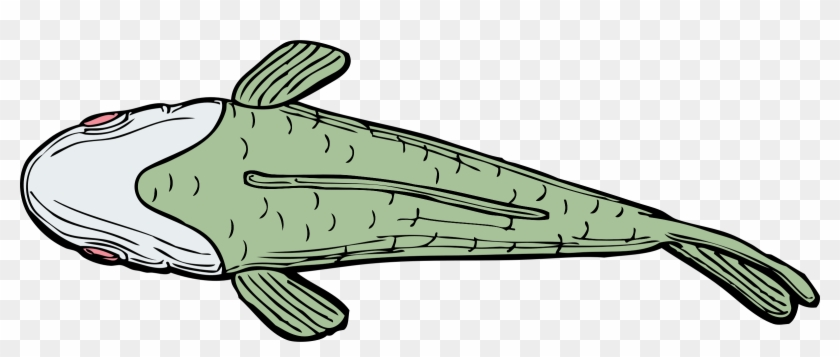Cartoon Catfish Pictures 8, Buy Clip Art - Top Of A Fish #664097