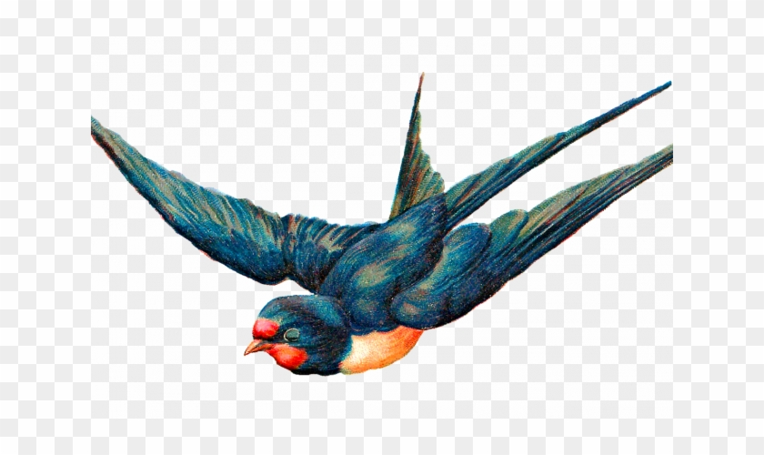Flying Bird Png Image - Antique Illustration Bird Free - Free