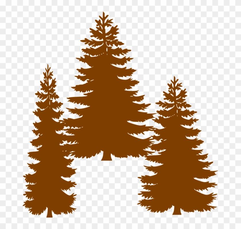 Cedar Tree Silhouette 25, - Tall Pine Tree Silhouette #670296