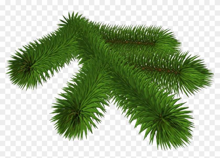 Christmas Branch Png.Fir Tree Branch Silhouette Download Christmas Day Free