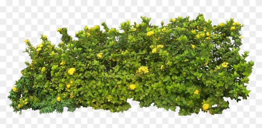 Imágenes De Plantas Y Arbustos
