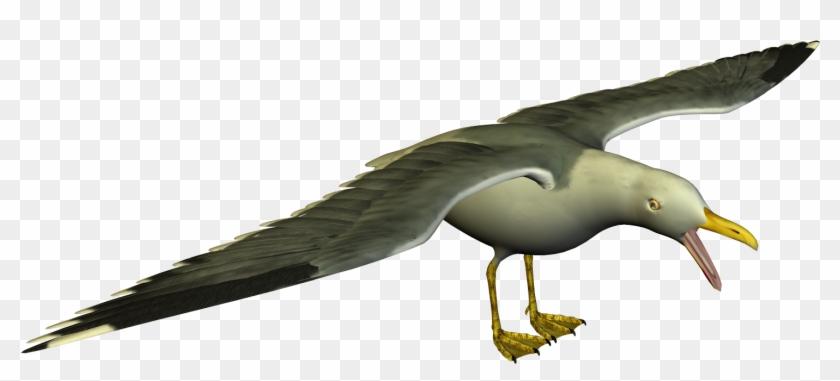 Seagull High Resolution Clip Art - European Herring Gull #124775