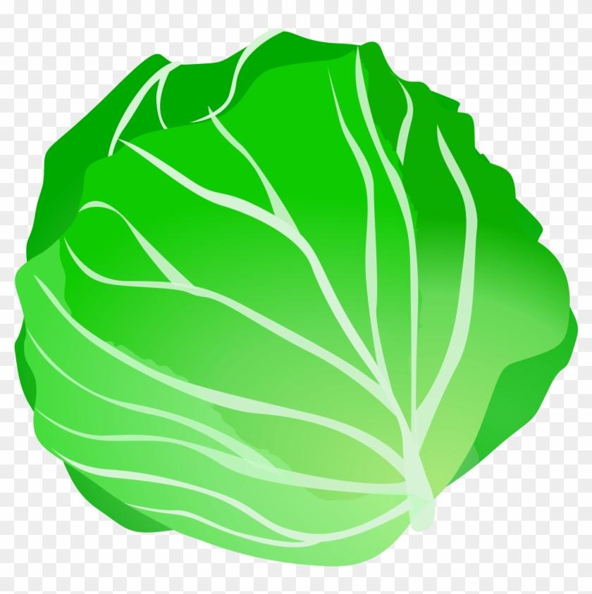 lettuce clip art clipartall free clipart cabbage clipart free rh clipartmax com clipart lettuce leaf lettuce clipart vector