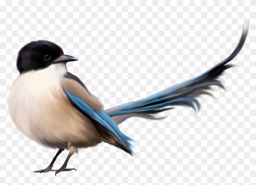 Bird With Blue Tail Png Clipart Picture - Friend Beautiful Quotes Fb #126221