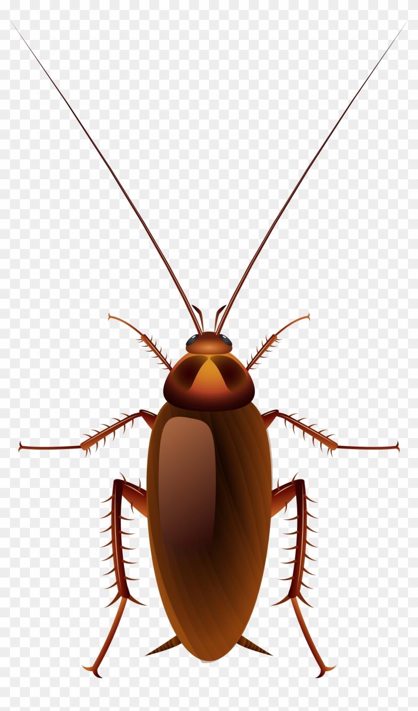 Cockroach Png Clip Art - Cockroach Png Clip Art #128182